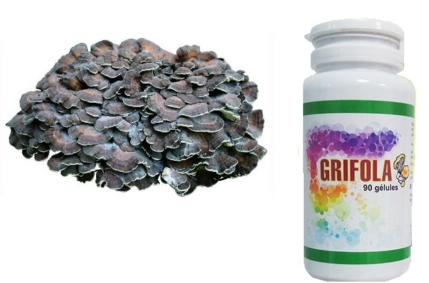 grifola1